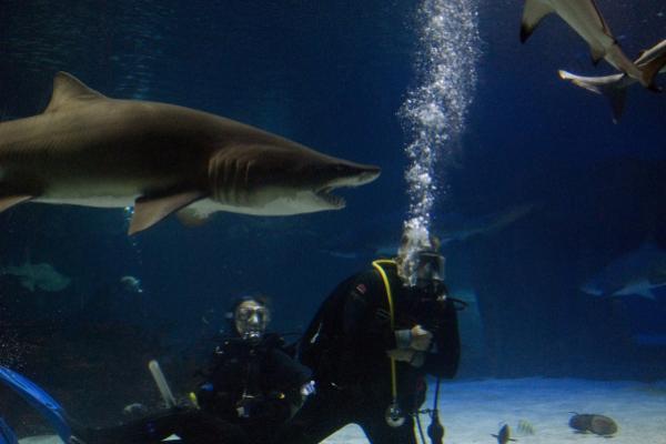 10 Stock Picks And Flicks From The Market-Savvy 'Shark Tank' Stars - (OUSA), Apple Inc. (NASDAQ:AAPL)