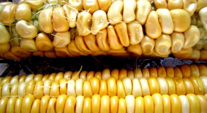 Russia Bans Monsanto's Modified Corn