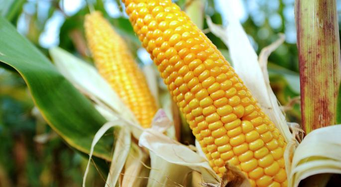 Angie 'Goddess Of Grain' Maguire Converses On Corn