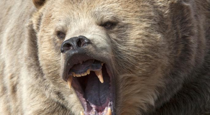 Bears Light Up Universal Display